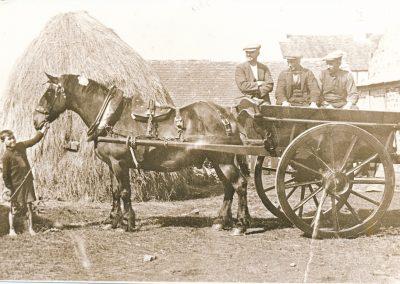 'Bolsa' the horse
